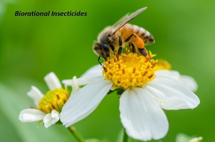 Global Biorational Insecticides Market 2020 forecast to 2028,
