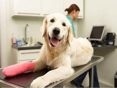 Pet Lifetime Cover Insurance Market to Witness Robust Growth