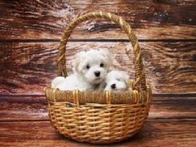 Pet Care E-commerce Market