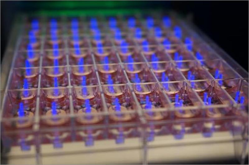 Generation of Engineered Human Myocardium using myriamed myrPlates