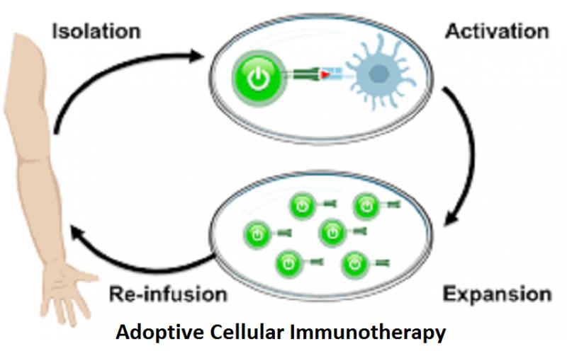 Adoptive Cellular Immunotherapy
