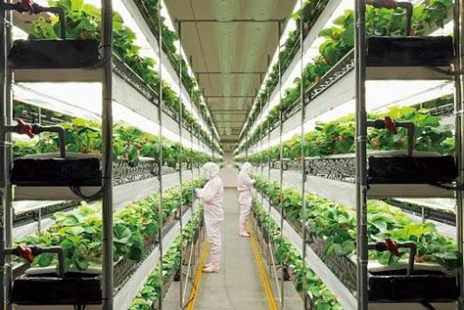 Plant Factory , Plant Factory Market, Plant Factory Market Analysis