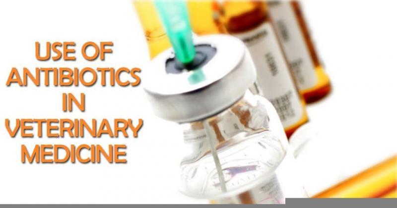 Veterinary Antibiotics Market