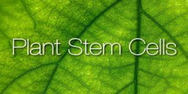 Plant Stem Cell Market
