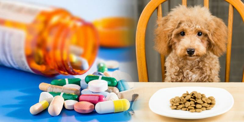 Animal Health Active Pharmaceutical Ingredients Market
