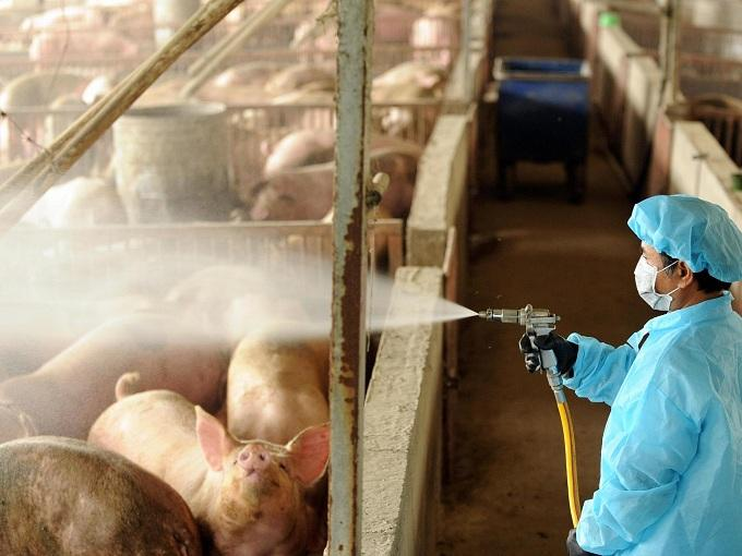 Livestock Risk Insurance for Infectious Diseases