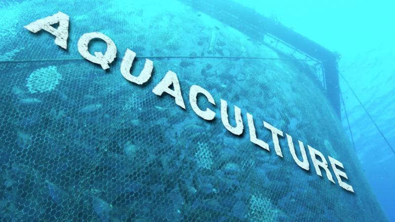 Aquaculture Market - Premium Market Insights