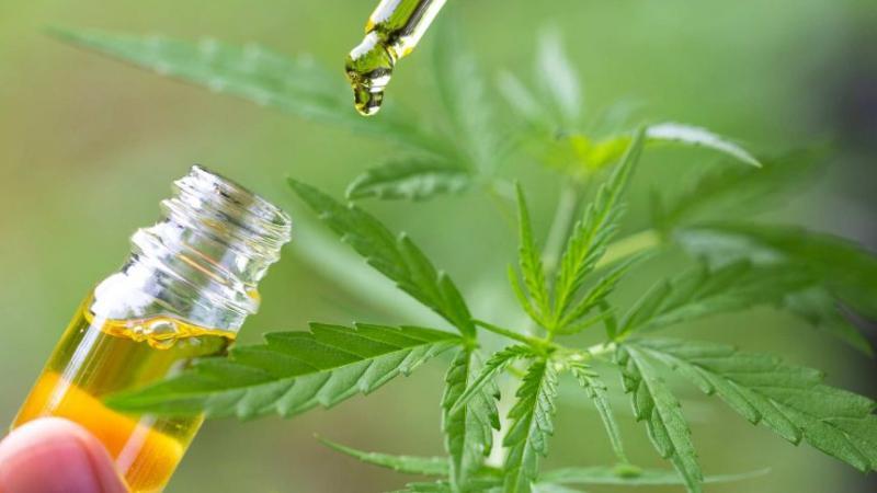 Medicinal Cannabis Market