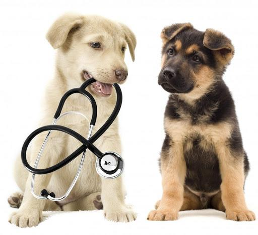 Animal Hospitals and Veterinary Clinics Services Market
