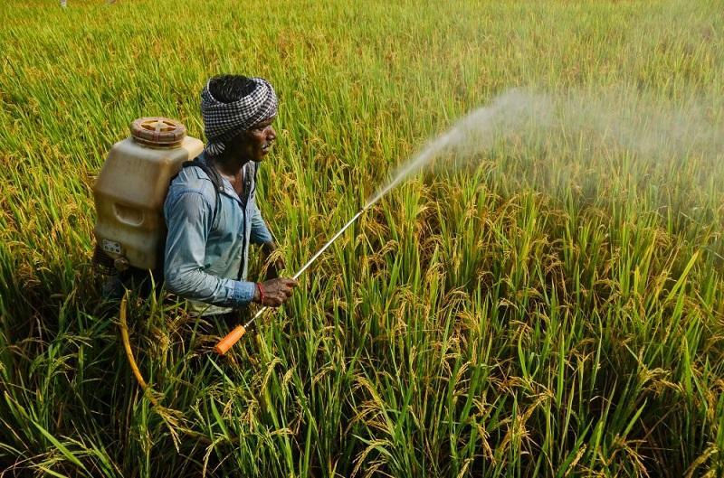 Kenya Agriculture Market, Kenya Agriculture Industry,
