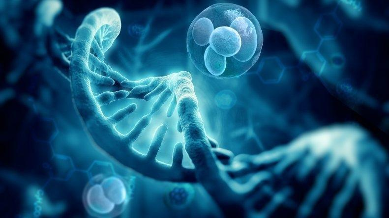 Transfection Technologies Market Is High trend Opportunities