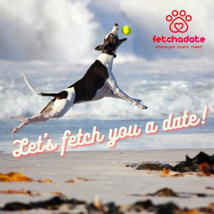 Forget the Wingman - Have a WingPet Help Get Dates Online -