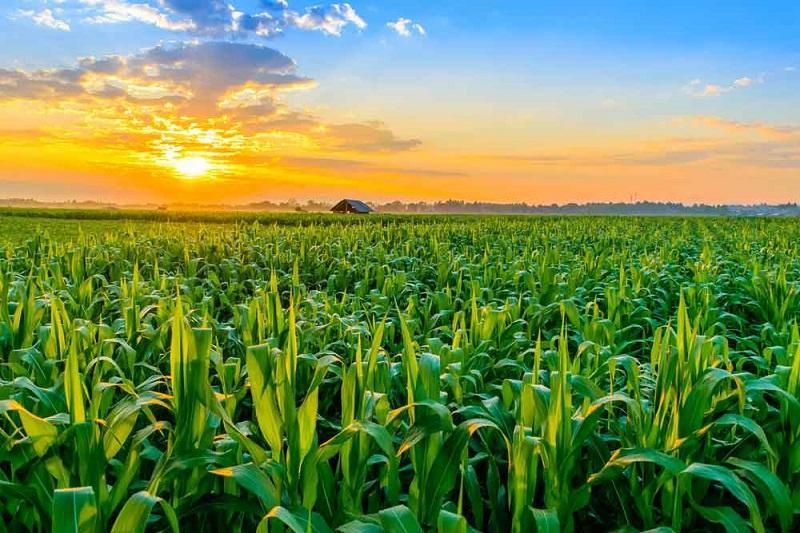Sweden Agriculture Market, Sweden Agriculture Industry: Ken
