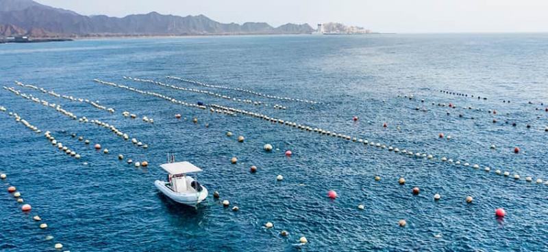 ASIS RHIB for Oyster Farming