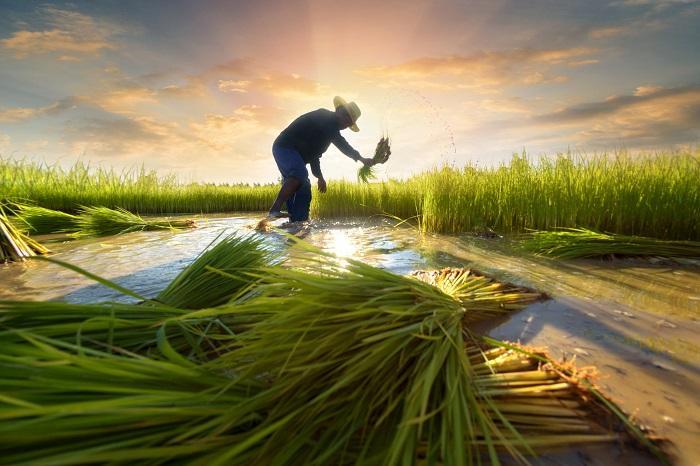 Sri Lanka Agriculture Market, Sri Lanka Agriculture Industry: