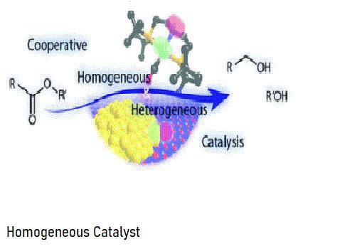 Homogeneous Catalyst