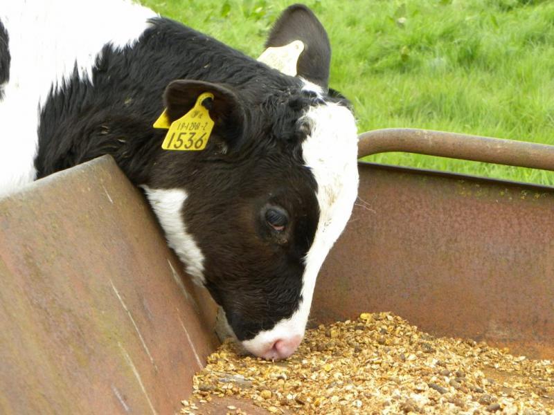 Prebiotics in Animal Feed Market Is Booming Across Globe :