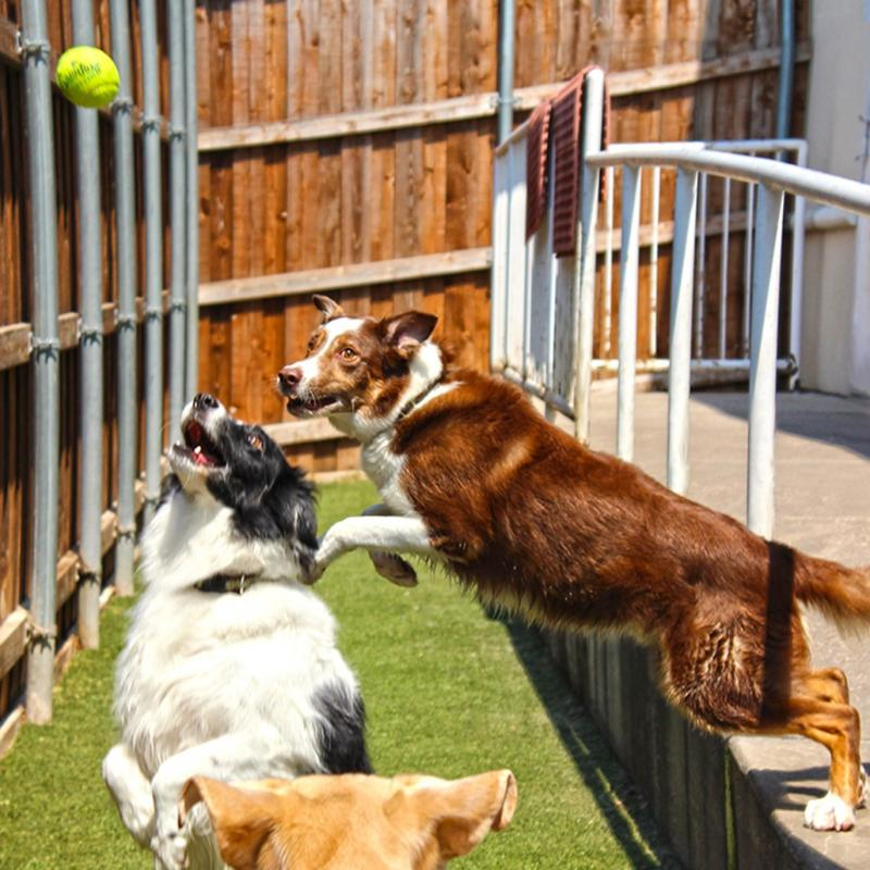 Pet Daycare and Lodging