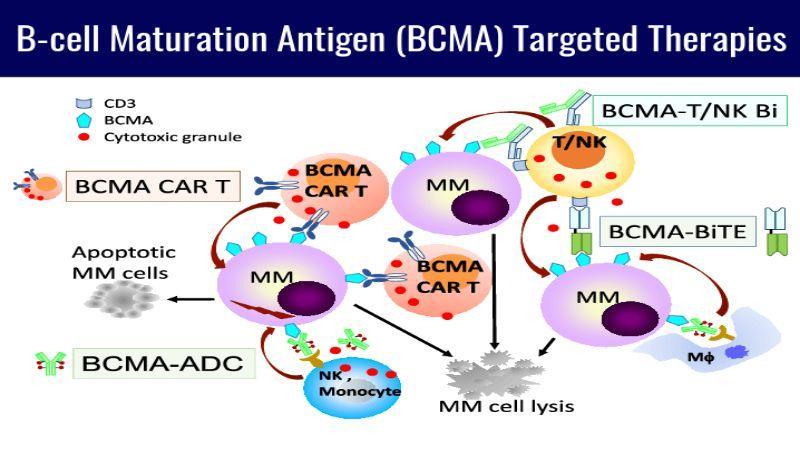 B-cell Maturation Antigen (BCMA)