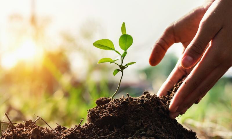 Sister companies in TAKKT Web-focused Commerce Segment reach astounding 300,000 tree donation for the Eden Reforestation Project