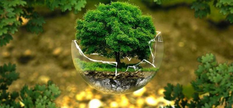 Environment Consulting Services