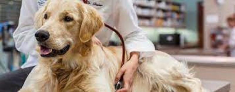 Companion Animal Pharmaceuticals Market