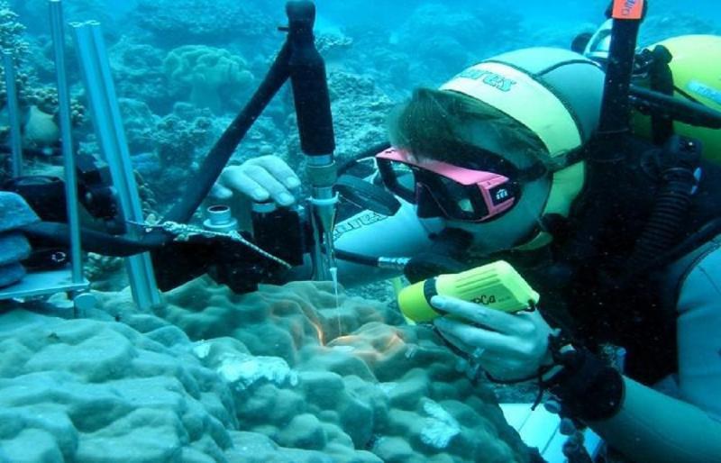 Global Marine Biotechnology Market 2021 Future Set to Massive