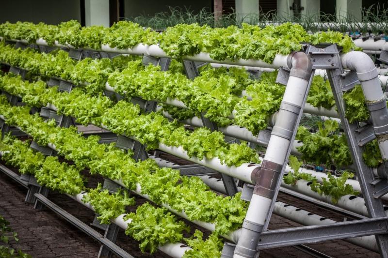 Global vertical farming market size was valued at $2.23 billion
