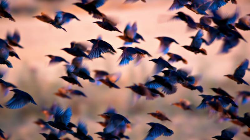 Global Swarm Intelligence Market 2021 Research