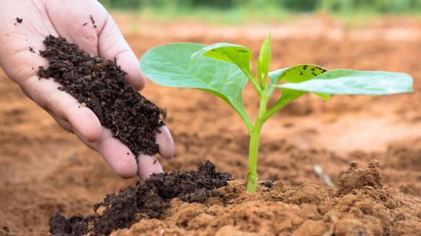 Global Fertilizer Market