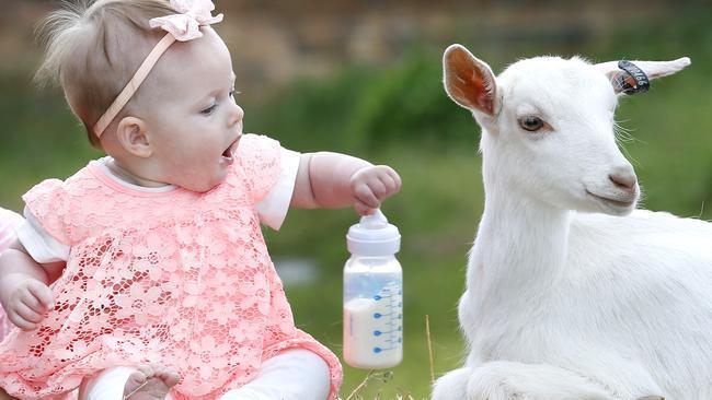 Goat Milk Infant Formula Market
