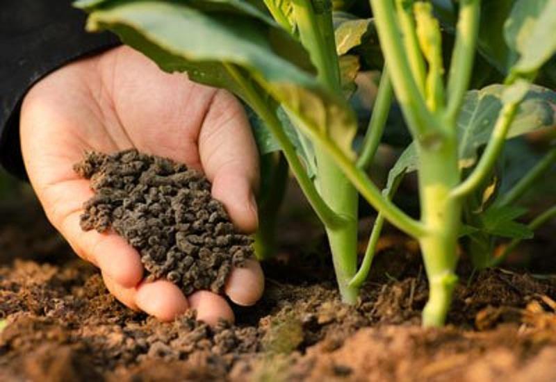 Middle East & Africa Catalyst Fertilizers Market