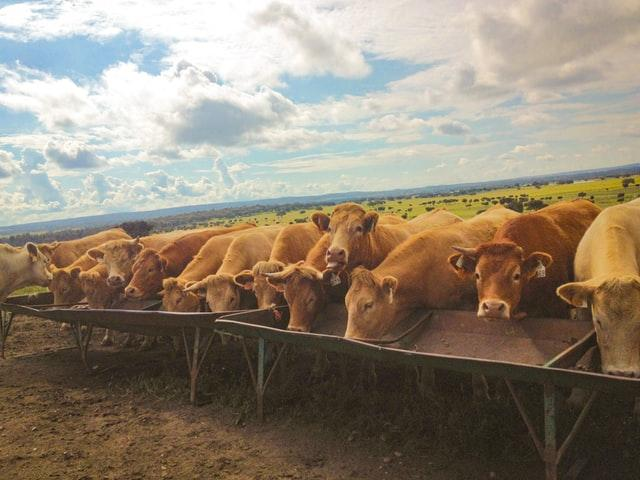 Animal Feed Additives Market is Booming Across the Globe