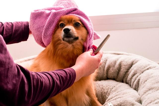 Pet Care Market is Booming Across the Globe by Share, Size,