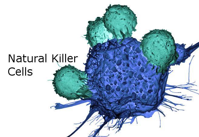 Natural Killer Cells Therapeutics