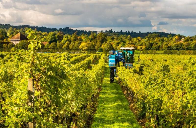 Vineyard Equipment