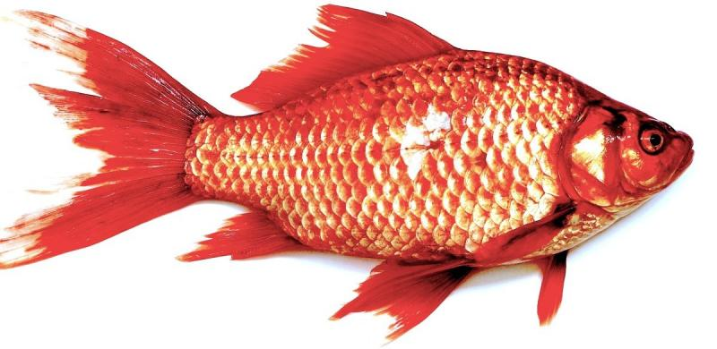 Indian Fish Market 2021-2026: Size, Price, Growth, Share,