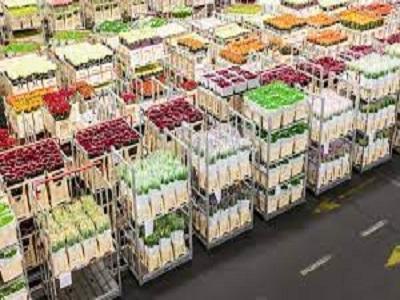 Flowers and Plants Logistics Market