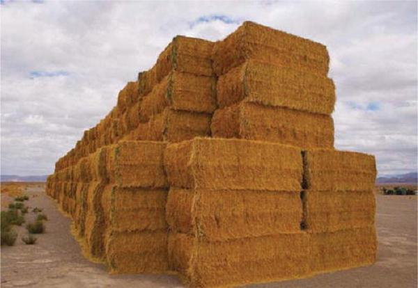 Global Wheat Straw Pulp Market, Global Wheat Straw Pulp