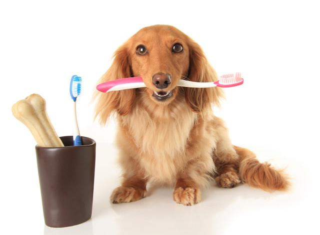North America Pet Oral Care Products Market