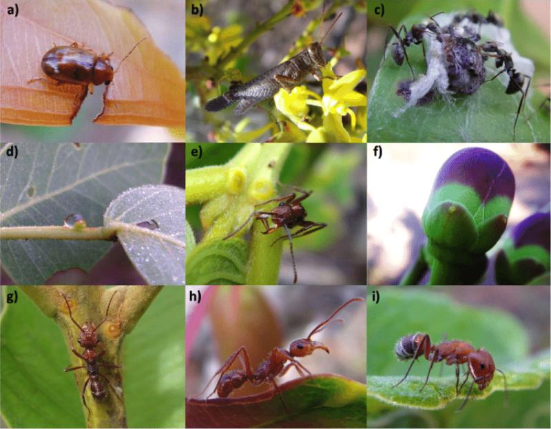 Exclusive Report Of Feeding Insects Market: Growth Rate, Top