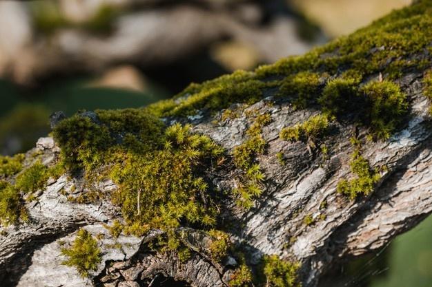 Microalgae-Based Products