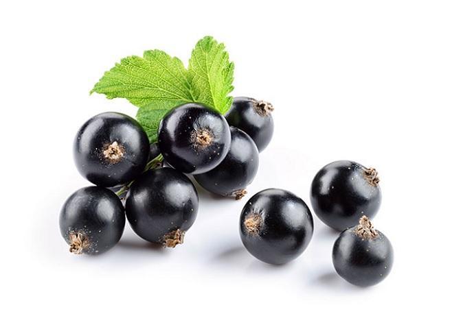Blackcurrant Seed Oil Market