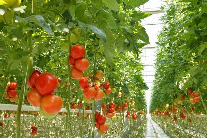 Global Smart Indoor Gardening Market , Smart Indoor Gardening Market Size, Smart Indoor Gardening Market Trends, Smart Indoor Gard