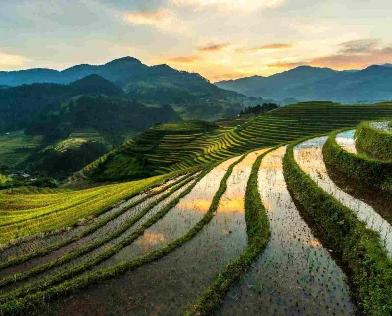 Vietnam Phosphate Market Competitive Insights, Demand