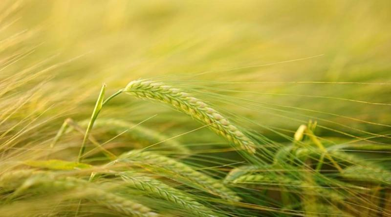 Agricultural Pheromones Market To Grow With an Impressive CAGR