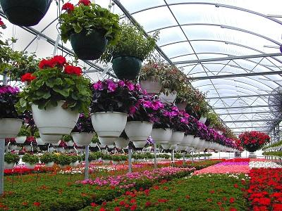 Asia-pacific region to dominate the Floriculture Market