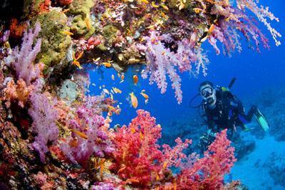 Exotissimo is Proud to Present Indonesia's Underwater World