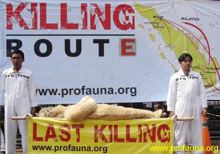"ProFauna launched ""LAST KILLING"" campaign in Jakarta, Indonesia (9/17/2008) urging the government tocurb and stop the illegal wildlife trade in Sumatera."