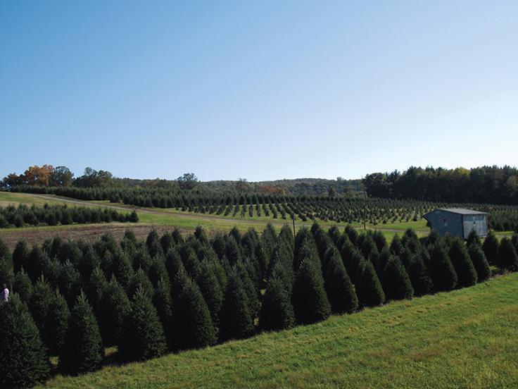 """The Hill"" at Wyckoff's Christmas Tree Farm"